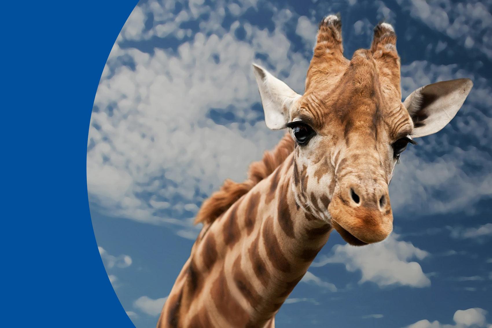 FAS Fundstück: Giraffe oder Pinguin?