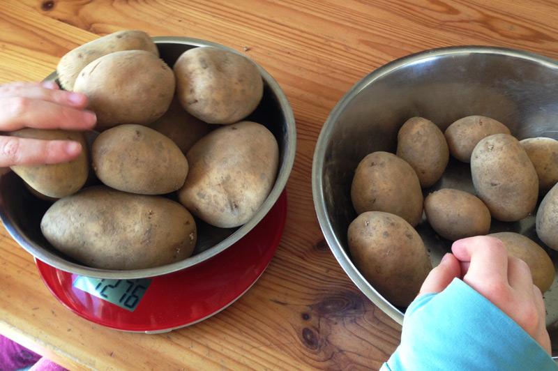 Homeschooling - mit Kartoffeln Mathematik lernen